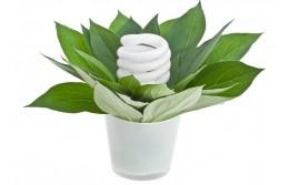 Лампы для растений. Виды и особенности.